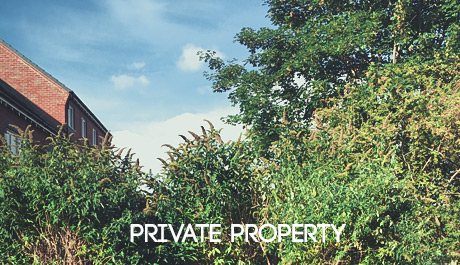 Japanese Knotweed Solutions for private property