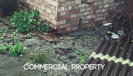 Japanese Knotweed Solutions for commercial property