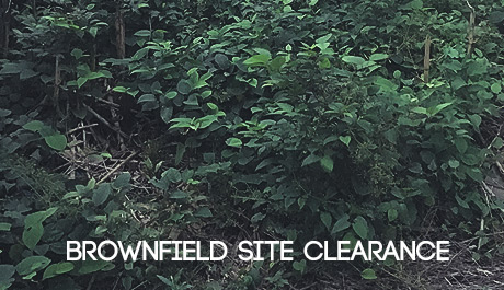 Japanese Knotweed Solutions for brownfield site clearances