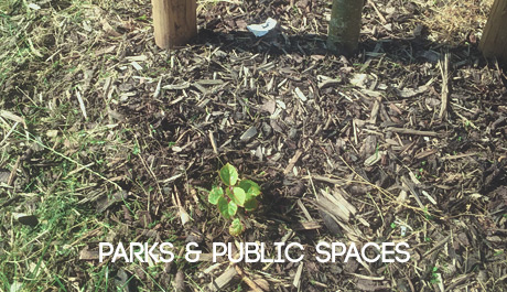 Japanese Knotweed Solutions for parks and public spaces