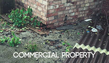 Japanese Knotweed solutions for commercial properties