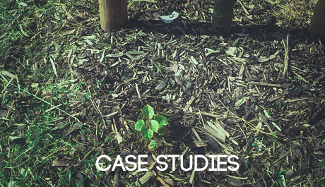 Japanese Knotweed case studies